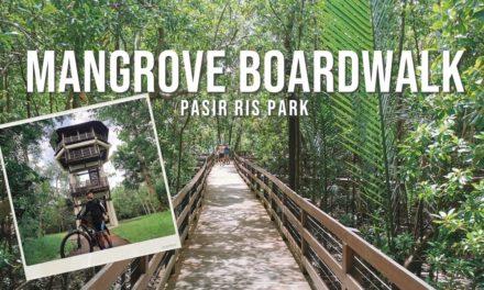 Tour: Mangrove Boardwalk & Bird Watch Tower in Pasir Ris Park